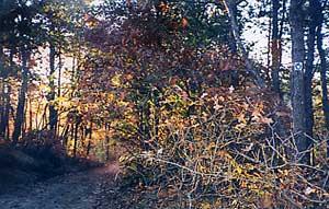 Mashpee River Woodlands Sanctuary