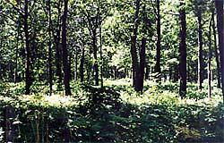 Nalebuff Sanctuary