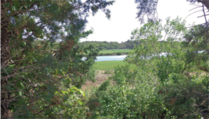 Land on Meadow Lane in West Barnstable
