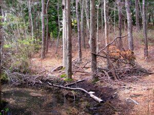 Red Brook Sanctuary - Brush Pile