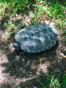Turtle at Margaret Wyman Sanctuary