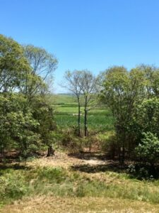 Margaret Wyman Sanctuary - View