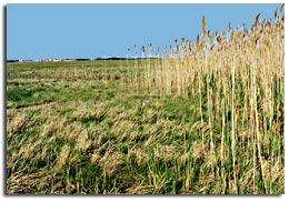 Salt Marshes - 2