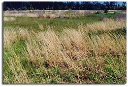 Sandplain Grasslands - 1