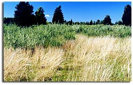 Sandplain Grasslands - 2