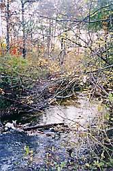 Quashnet River Sanctuary
